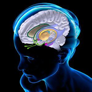 brain on gamification