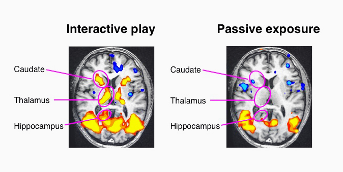 hippocampal activation in the brain gamification